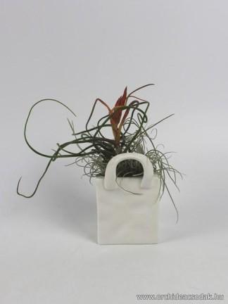 Tillandsia bulbosa porcelán táskában