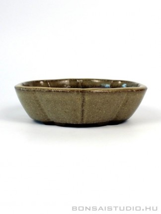 Shohin bonsai tál 17.
