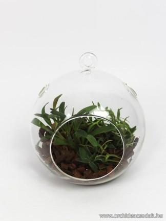 Orchidea függeszthető üveggömbben