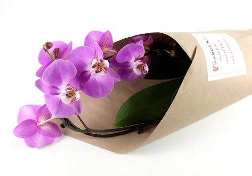 Mit csináljak az orchideával vásárlás után?