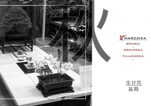 Kiállítás a japán kultúra közelítéseiből - bonsai és orchidea