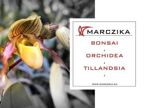 Egy szenzációs orchidea és bromélia kiállításra invitálunk!