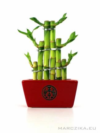 Szerencse bambusz piros kaspóban