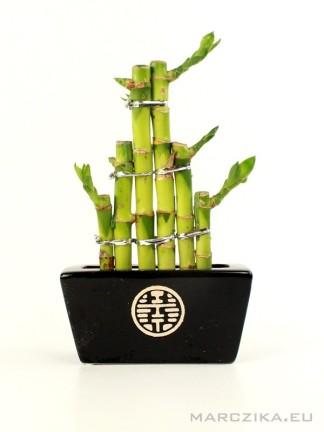 Szerencse bambusz fekete kaspóban