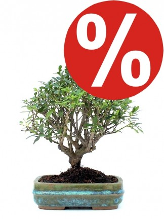 Bonsai products on sale