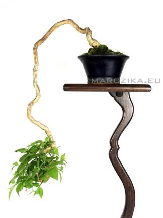 Kaszkád Lonicera bonsai kifu méretben Japánból