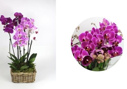 Lepkeorchideák enteriőr dizájnnak - színek és harmóniák
