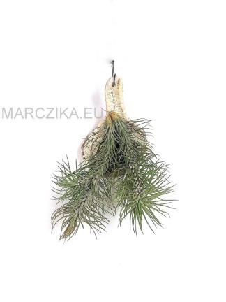 Tillandsia funckiana var. recurvifolia 01.